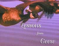 Geese lessons